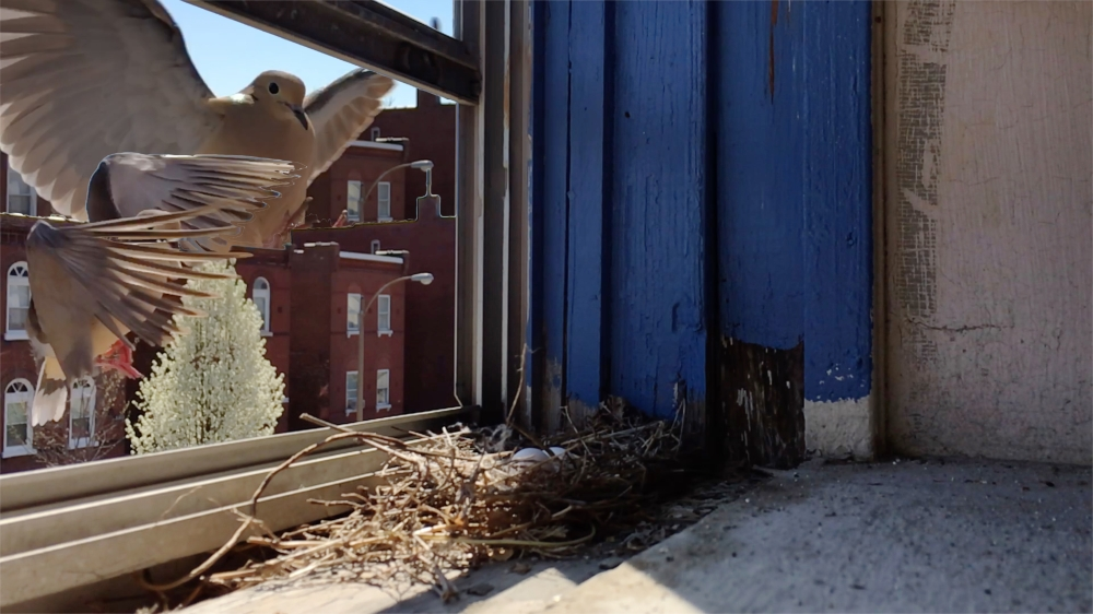 BirdLanding1and2